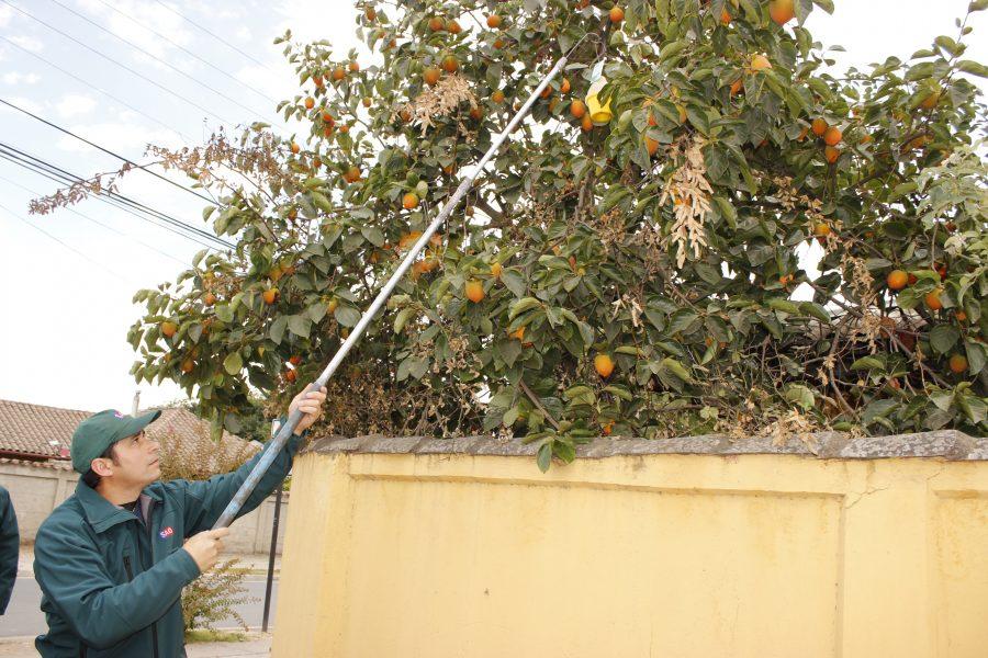 En Machalí se realizará simulacro de erradicación de la mosca de la fruta