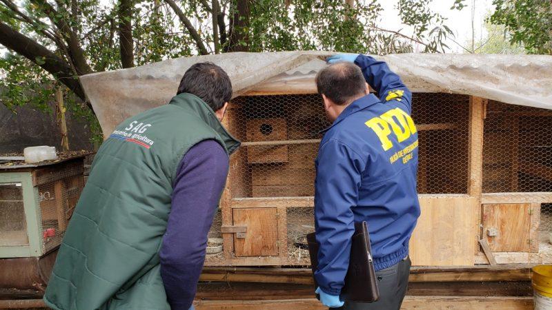 PDI realiza investigación por aves exóticas